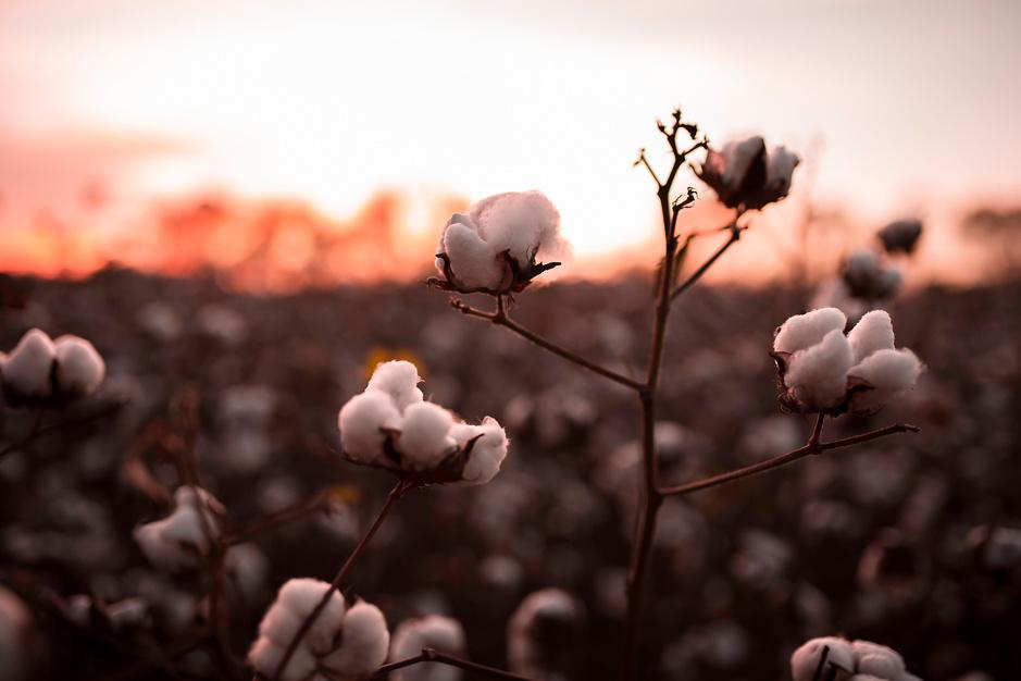 Coronacrisis maakt miljoenen kledingarbeiders werkloos: 'Grote merken moeten hen helpen'