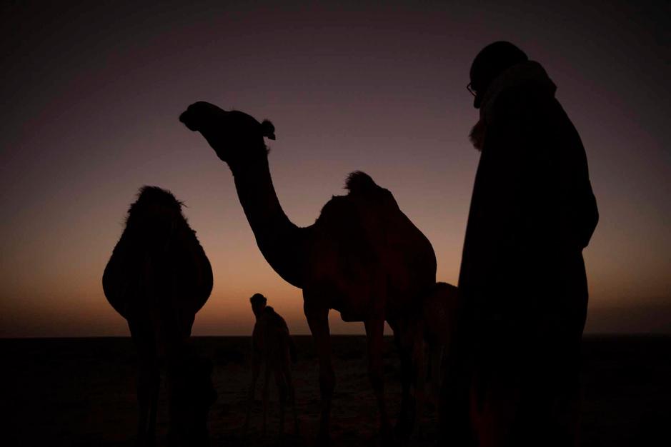 """Au Sahara occidental, un éleveur de dromadaires """"à l'ancienne"""" (en images)"""