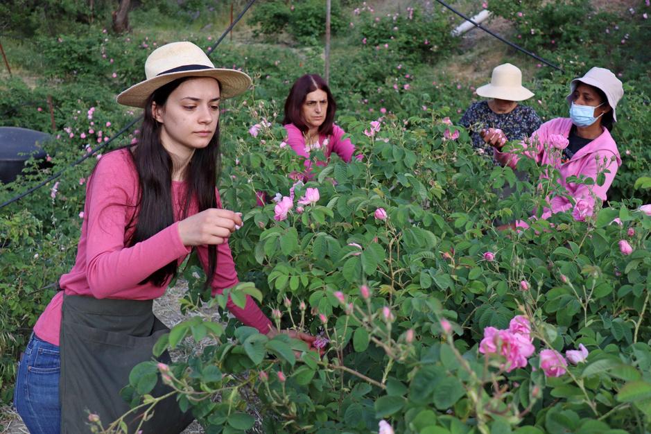Chypre : paradis des plantes aromatiques