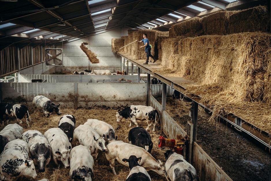Van boer tot bord: fotograaf Jimmy Kets brengt Vlaamse vleessector in beeld