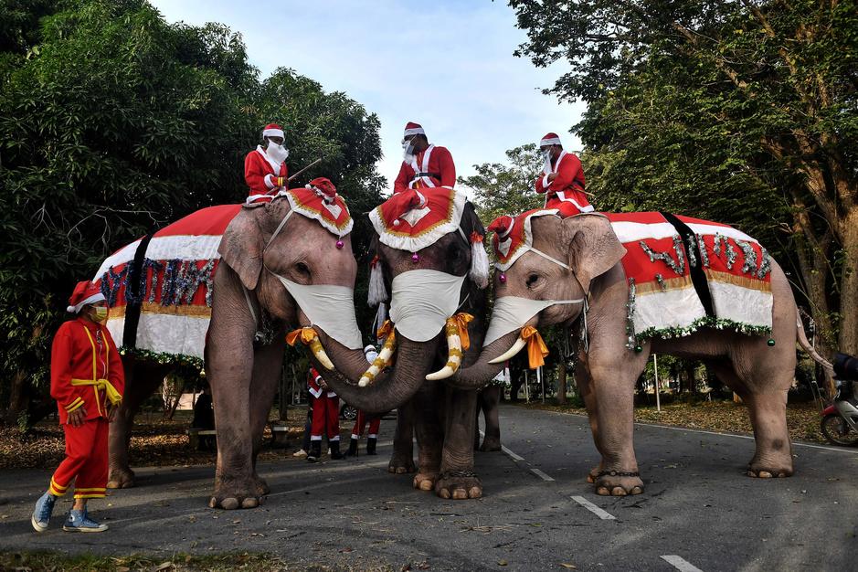 Des éléphants en père Noël distribuent des masques dans une école de Bangkok