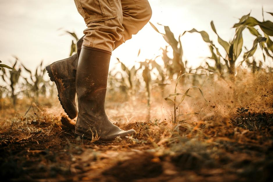 Op droog zaad: zo kan onze voedselproductie het gebrek aan regen overleven