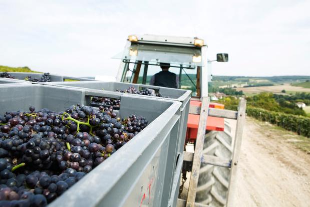 Franse en Italiaanse wijnboeren smijten tonnen druiven weg