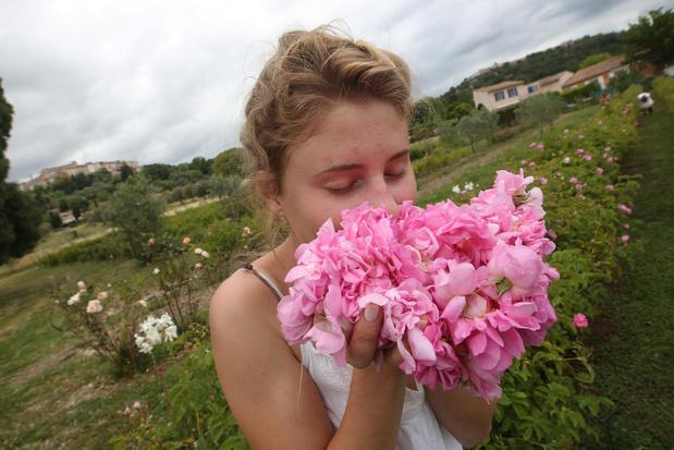 Le parfum des roses améliore l'apprentissage durant tout le sommeil