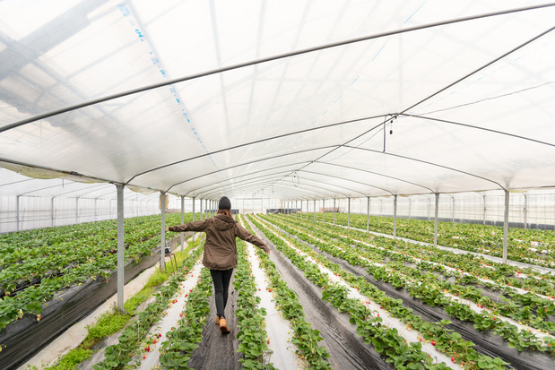 Ook landbouwers komen in de problemen door corona: 'We hebben snel helpende handen nodig'