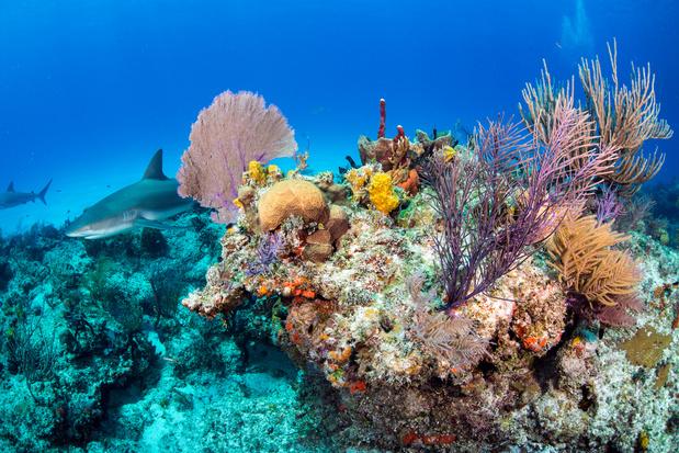 """""""Liste rouge"""" de la nature: près de 30% des espèces étudiées menacées"""