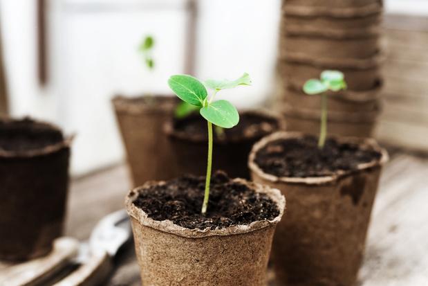 Natuurpunt en Plantentuin Meise vragen hulp om zaad van bedreigde planten te verzamelen