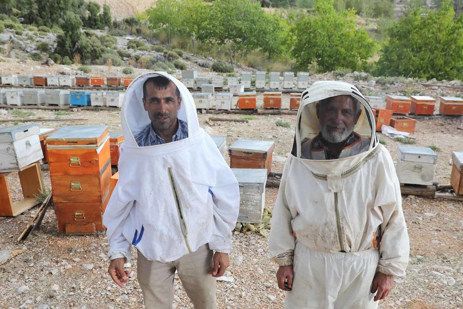 Le miel de pin, l'un des plus prisés au monde, en sursis