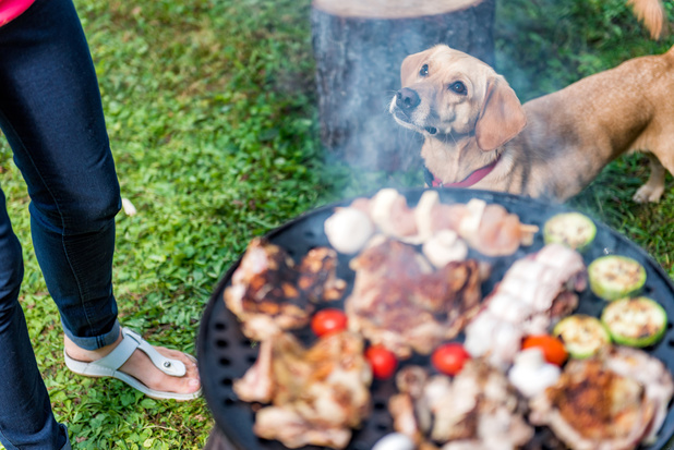 Barbecuetijd! Let op voor jouw hond