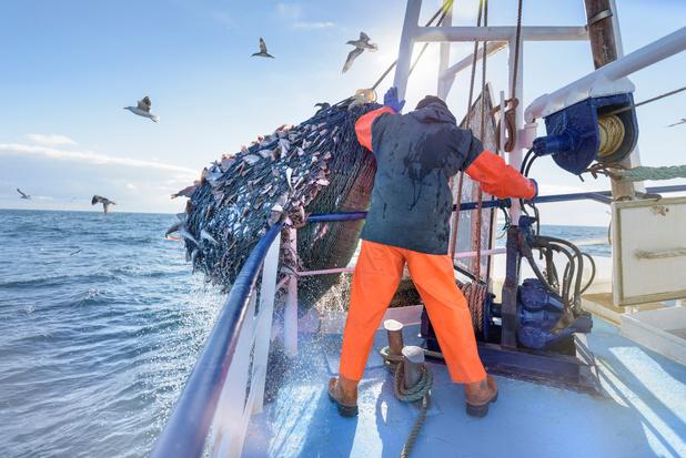 Vers plus d'écologie dans la pêche?