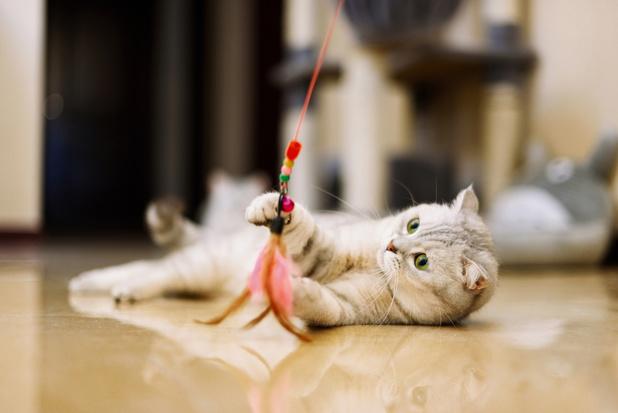 Met je kat spelen kan vogels redden