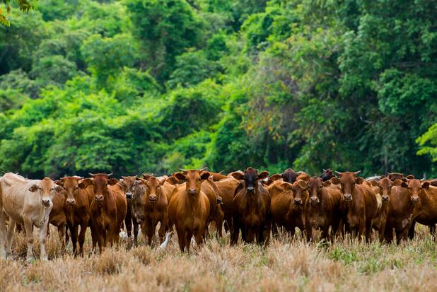 Ontbossing in Brazilië bereikt nieuw hoogtepunt