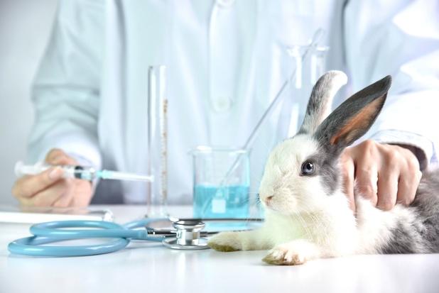 Mexico is eerste Noord-Amerikaanse land dat dierproeven voor cosmetica bant