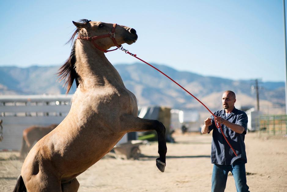 Rundskop met een paard en 15 andere tips voor Film Fest Gent