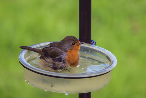 Vague de chaleur : il est important de donner à boire aux oiseaux