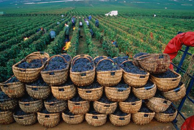 Vin: la production française devrait chuter à un niveau historiquement bas en 2021