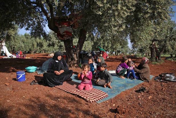 En Syrie, les oliveraies comme refuge pour les déplacés d'Idleb (en images)