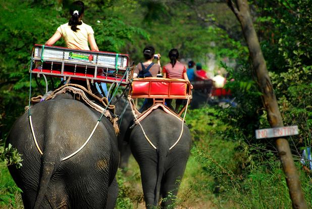 Comment repérer les dérives du tourisme animalier