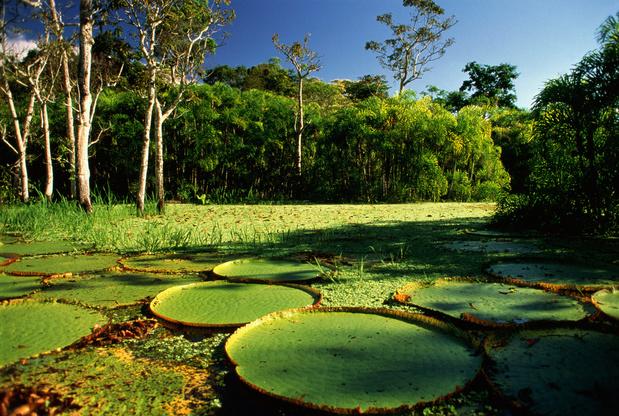 Brazilië daagt Leonardo DiCaprio uit om woorden over Amazonewoud om te zetten in daden