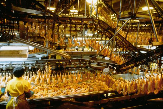 """Les USA veulent la fin de l'interdiction du """"poulet au chlore"""" dans l'UE"""