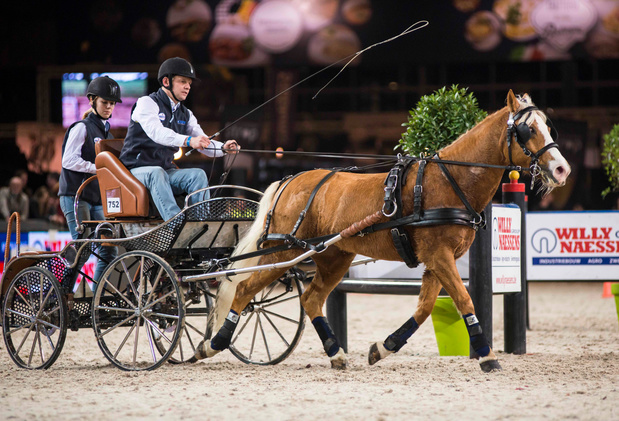 Win tickets voor Flanders Horse Expo 2020