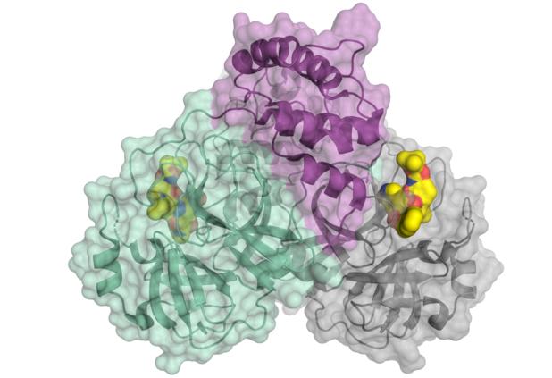 Covid19 : découverte d'un nouvel inhibiteur de protéase plus puissant