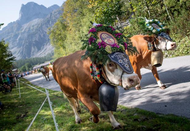 Climat: les alpages typiques du Tyrol menacés de disparition (en images)