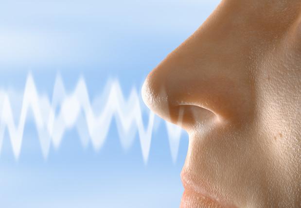 Anosmie : le SARS-CoV-2 n'infecterait pas les neurones olfactifs