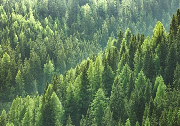 Une extension des forêts en Europe pourrait apporter plus de pluie