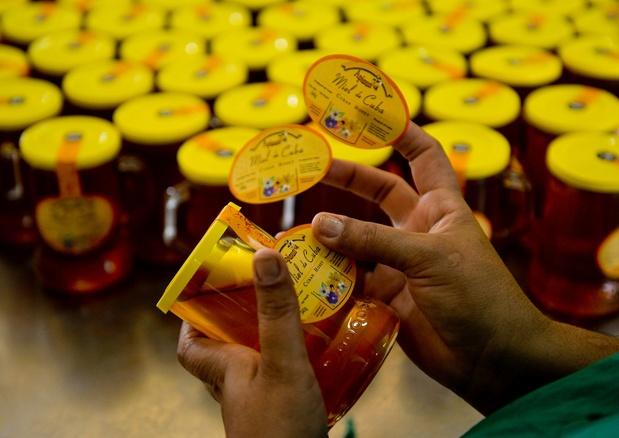 Loin des pesticides, les abeilles cubaines produisent un miel qui ravit l'Europe
