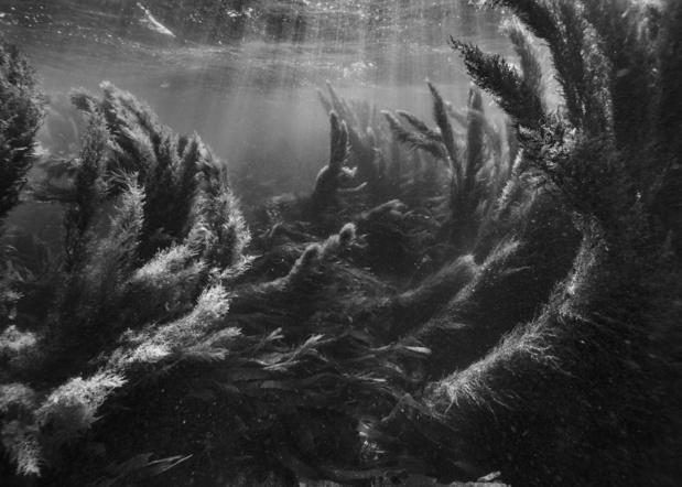 L'oeuvre de la semaine: sous l'eau, la vie continue