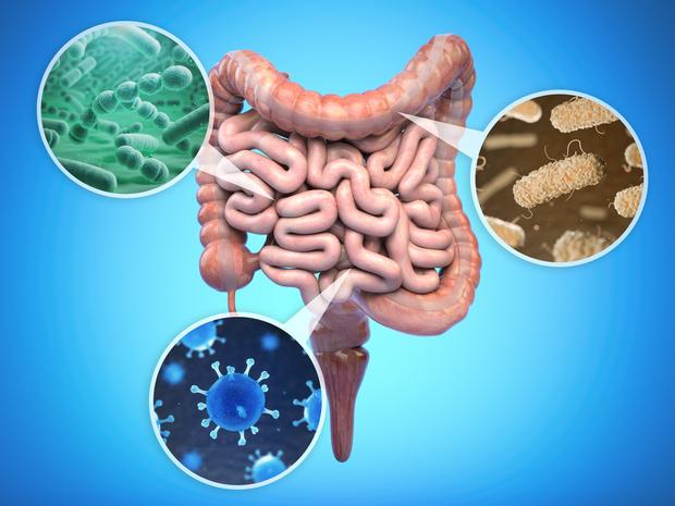WELBIO donne son nom à une nouvelle bactérie
