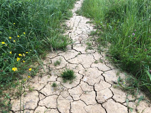 La sécheresse cause des dommages dans l'agriculture