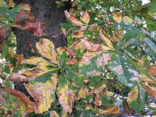 Froid, pluie, humidité : quel impact sur la végétation?
