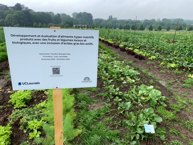 L'UCLouvain crée la première ferme universitaire pour étudier le maraîchage bio sur le terrain