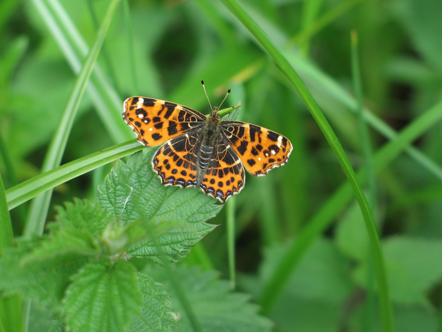 Réservez un carré de nature sauvage pour les papillons