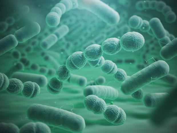 Des fragments de protéines bactériennes impliqués dans l'exacerbation aiguë de la FPI
