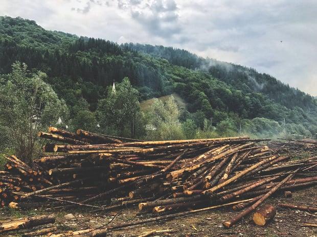 Les entreprises impliquées dans la déforestation empêchent l'UE de légiférer (Greenpeace)