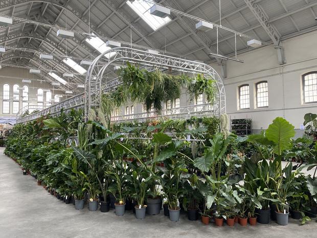 Nieuwe pop-up editie van PUP in Brussel met meer dan 380 soorten planten