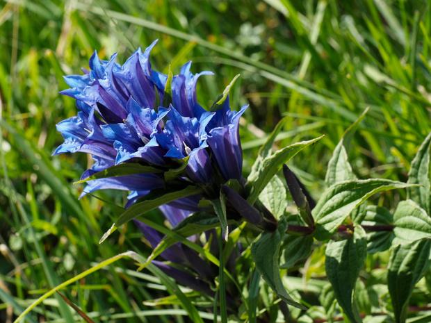 Natuurpunt vraagt hulp om zaden van bedreigde planten te verzamelen