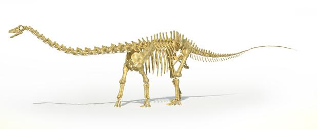 Un cousin du Diplodocus fait un flop aux enchères