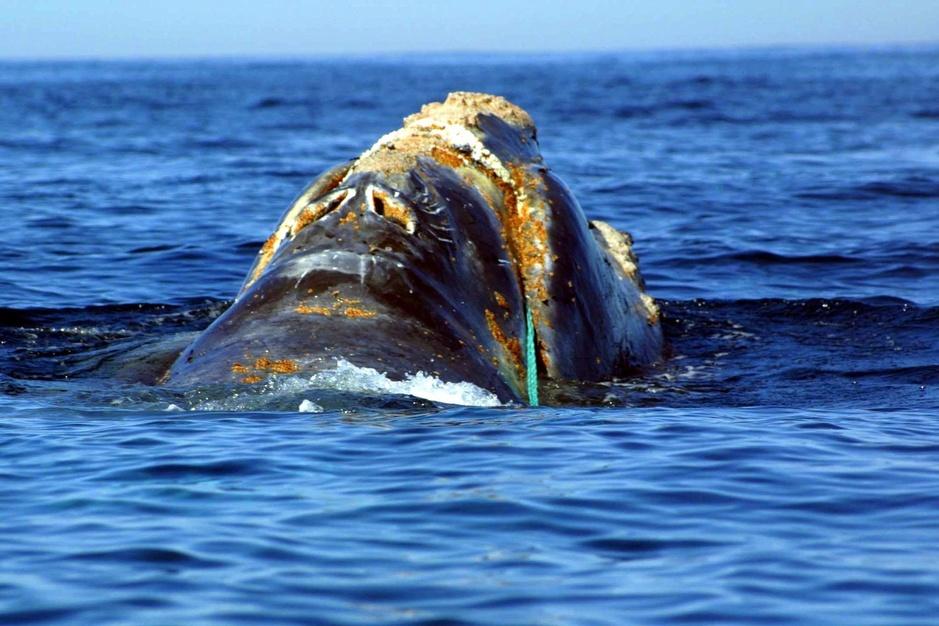 Plastic crisis: wanneer de walvis wegwerpzakjes braakt