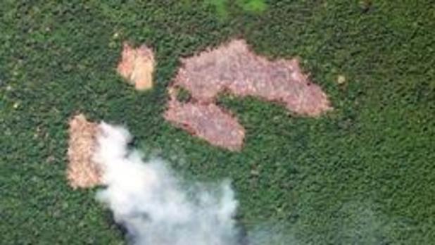 Bolsonaro verbiedt kappen en verbranden Amazonegebied ten behoeve van de landbouw