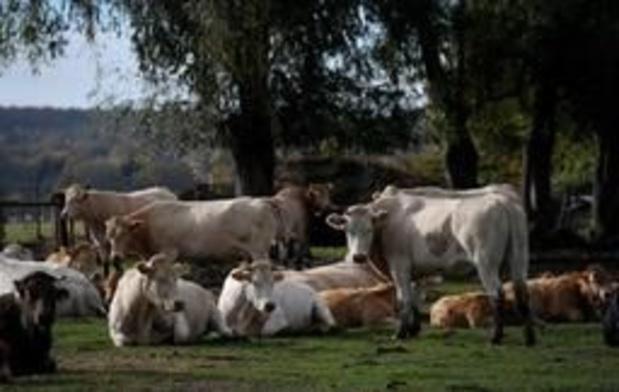 Le prix moyen/ha d'un terrain agricole était de 26.000 euros en 2018
