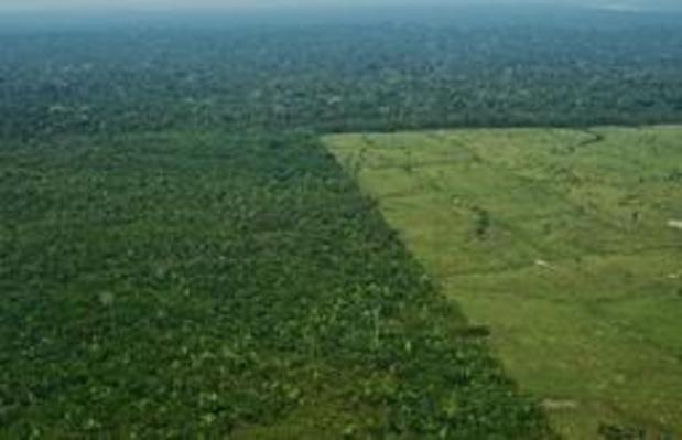Ontbossing in Brazilië op een jaar tijd verviervoudigd