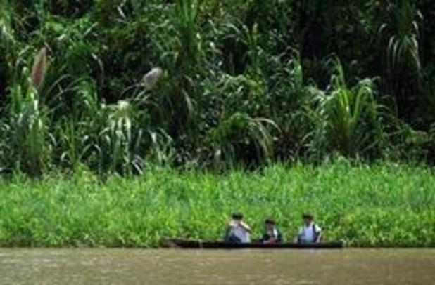 Effect van ontbossing op klimaatverandering groter dan gedacht