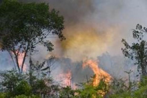 Incendies en Amazonie: 4 millions d'hectares dévastés en Bolivie