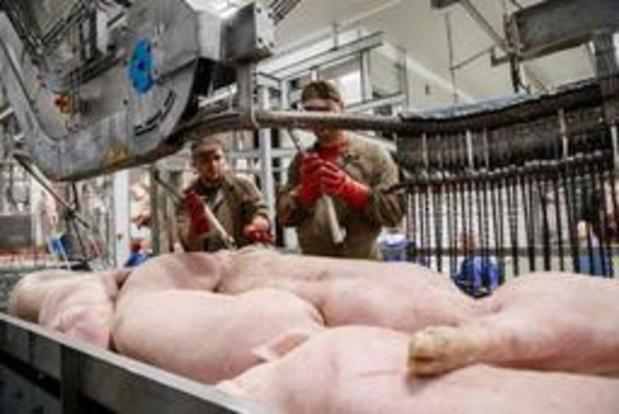 Slachthuis ontkent dat varkens gestorven zijn bij transport