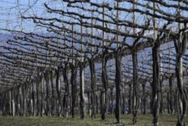 Italiaanse Prosecco-regio op Werelderfgoedlijst