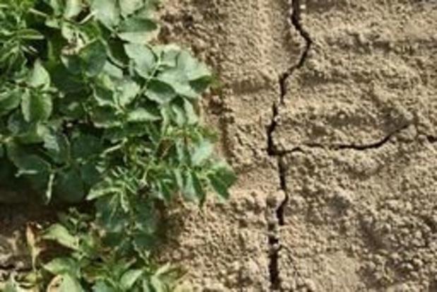 Les productions de pommes de terre et betteraves ont pâti de la sécheresse en 2018